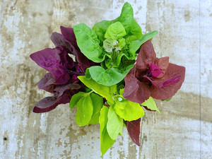 This slow growing green isn't just green! Often used as a substitute for spinach, which tends to bolt at the first whisper of warm weather, Orach grows to 3 feet tall, withstands frost and doesn't bolt even in the summer heat.  Again, It's slow-growing, though, so buy more than 1 or use it as a colorful filler in your favorite lettuce-mix.