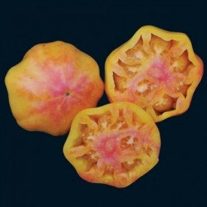 Mary Robinson's BiColor Tomato:  This large slicing tomato is more red than what's pictured, with striking yellow and pink tones throughout.