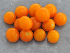 Citrusy sweet Sungold Select tomatoes...the heirloom version of a national favorite.