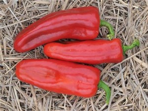 Red frying pepper. You know that whole, wait until August thing I talked about in my post earlier...this is the pepper that made me wait that long. They were delicious once they came in...but the wait...will not be happening again this year, that's for sure!