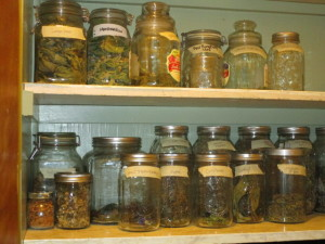 early summer herbs